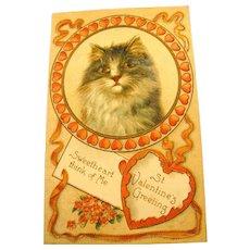 Embossed Kitten St Valentine's Postcard