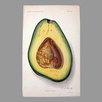 Ellen Schutt Avocado Color Printed Lithograph