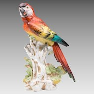 German Dresden Porcelain Figurine of Macaw Parrot