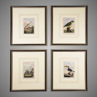 Set of Four 18th C. Engravings by George L. Comte de Buffon