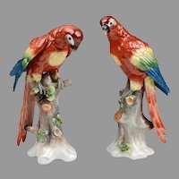 Pair of German Porcelain Sitzendorf Macaws