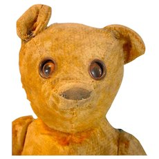 Rare Vintage Googly Eye Mohair Teddy Bear, 1920's