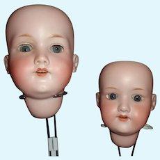 2 Antique Bisque AM German Doll Heads