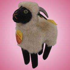 Steiff's Earlier Snucki Sheep With All IDs