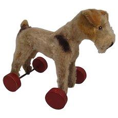 Steiff's Early Postwar Foxy Fox Terrier With ID on Eccentric Wooden Wheels