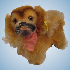 Steiff's Almost Smallest Peky Pekingese With All IDs