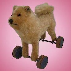 Steiff's Prewar Chow Chow Puppy Dog On Wheels With ID