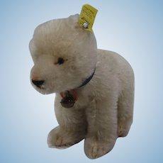 Steiff Smallest White Mohair Polar Bear With All IDs