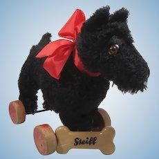 Steiff Lovely and Large Prewar Steiff Black Mohair Scotty on Eccentric Wheels