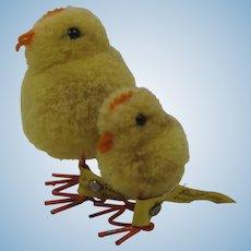 Steiff Early Postwar Woolen Miniature Chick Pair With All IDs