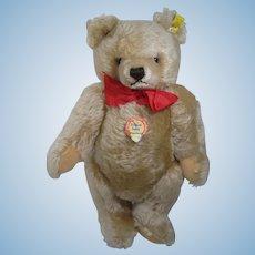 Steiff's Larger Blonde Mohair Original Teddy Bear With All IDs