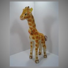 Steiff Medium Sized Mohair Giraffe With All IDs