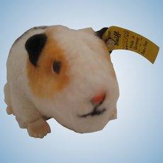Sweet Like New Steiff Swinny Guinea Pig With All IDs