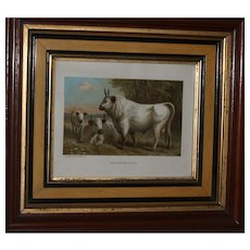 1885 CHILLINGHAM CATTLE Chromolithograph Print by L. Prang & Co. - Published by Selmar Hess N.Y.