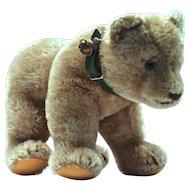 STEIFF Bear Cub on All Fours - Green Collar