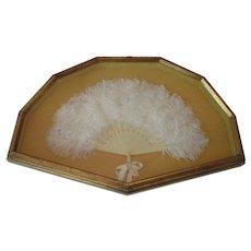 Feather Fan..