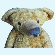 Rare  bear steiff
