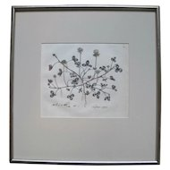 "Antique Framed Hand Colored Botanical Engraving Print by William Curtis ""Trifolium Repens"""