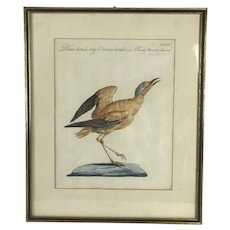 Antique 18th Century COURSER BIRD Print Hand Colored Engraving Saverio MANETTI