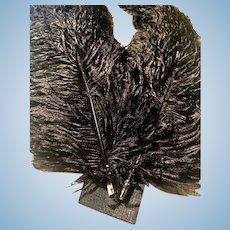 Two 20inch Black Ostrich Plume Feathers for Fancy Victorian Hats and other apparel_THICK and LUSH