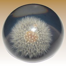 Ethereal Lucite Cased Dandelion Head Paperweight