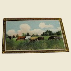 Vintage Advertising Trade Card with Cows for M.T. Garvin & Co.The Bargain Dry Goods House of Lancaster, Mint