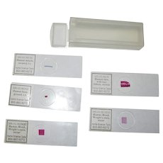 Human Biology 5 Slide Set in Plastic Case by MS-HUBLOOD Home Science Tools Microscope