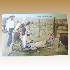 """Early 20th Century Postcard """"Branding Time On The Ranch"""""""
