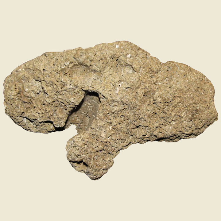 Fossil Agatized Coral Specimen, Circa 38-25 Million Years Old, 5
