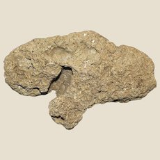 """Fossil Agatized Coral Specimen, Circa 38-25 Million Years Old, 5"""" by 3"""" by 2"""""""
