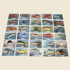 30 Vintage Florida Fish Postcards, Photos by Robert Wasman
