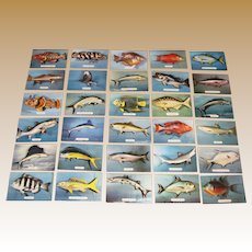 30 Vintage Florida Fish Postcards, Photos by Robert Wasman