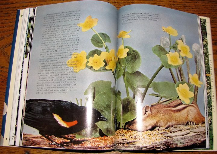 1964, 2 Book Box Set Water Prey & Game Birds and Song & Garden Birds of  North America, National Geographic Society