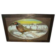 Huge Early Pheasant Taxidermy Diorama ca.1922: Pheasant Taxidermy Shadowbox