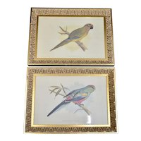 c1884 Pair of Antique Parakeet & Golden-Crowned Conure Parrot Bird Art in Ornate Gilt Wood Frames