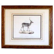 19th Century Della Grandezza Naturale Watercolor Deer Prints