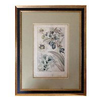 "Rare 19th Century Watercolor Prints ""Fleurs de Fantasie"" by Buchert"