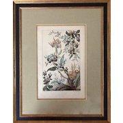 "Rare Watercolor Print: ""Fleurs de Fantasie"" by Buchert"
