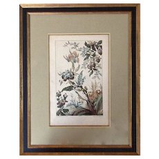"Rare Watercolor Print: ""Fleurs de Fantasie"" by Buchert"