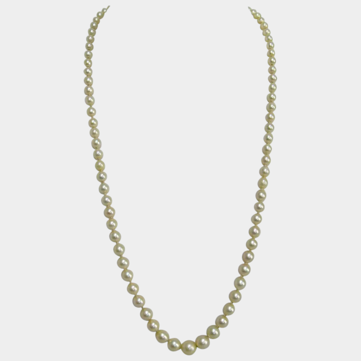 63194d36d8966 Graduated Akoya Cultured Pearl Necklace with 14K White Gold Clasp.