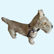 Cute Little Scottie Dog with Harness