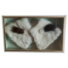 Ermine Collar in Display Box for French Fashion
