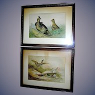 Pair of Historic Prints of Game birds by Alexander Pope