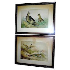 Antique Pair of Chronograph Prints of Game birds by Alexander Pope