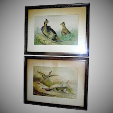Antique original prints of game birds by Alexander Pope