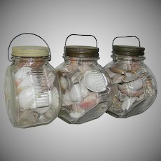 Set of Vintage Glass Store Containers or Jars filled with seashells