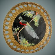 Vintage Feathered Peacock Wallhanging Framed in a Basket