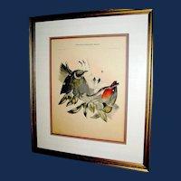 Antique Lithograph Print D G Elliot