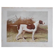Antique 19th Century Dog Lithograph-Pointer