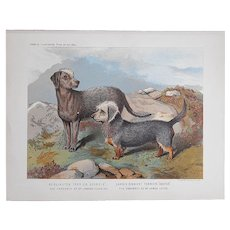 Antique 19th Century Dog Lithograph-Terriers